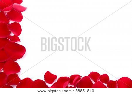 background of red rose petals and rose
