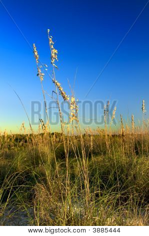 Beachgrass At Honeymoon Island Ii