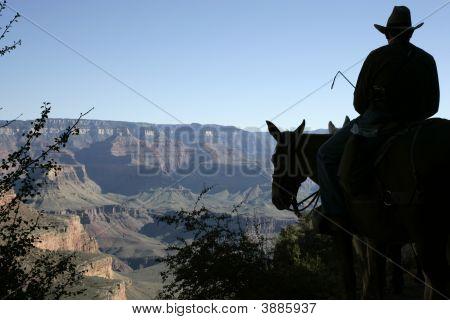 Grand Canyon Mule Fahrer