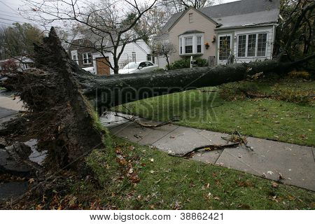 SPRINGFIELD, NJ - OCT 30: A tree lays between two homes on October 30, 2012 in Springfield, NJ. Hurricane Sandy struck the Northeast on October 29, 2012 causing severe damage throughout the region.