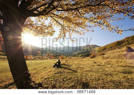 Colorful autumn tree at sunset with woman sitting and contemplating nature