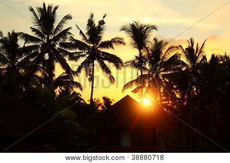 Sunset in tropical area with silhouettes of a palm trees