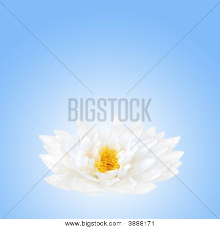 Lotus Flower Beauty
