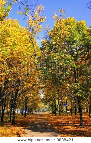 October Park Alley