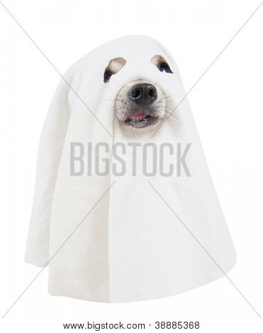 a dog dressed up as a spooky ghost