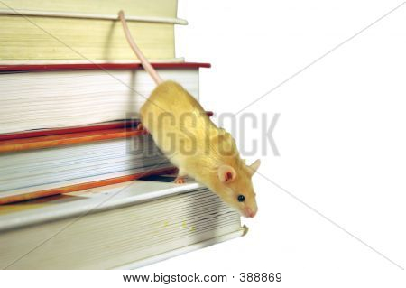Mouse On Books