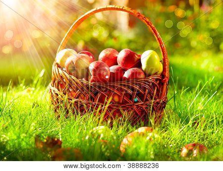 Organic Apples in a Basket outdoor. Orchard. Autumn Garden.Green Grass
