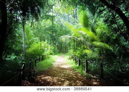 way in jungle of Seychelles islands
