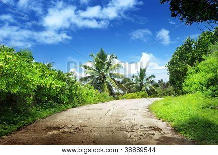 road in jungle of La Digue island, Seychelles