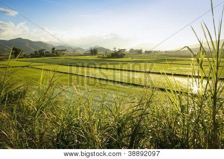 Reis Felder nördlichen Luzon, Philippinen