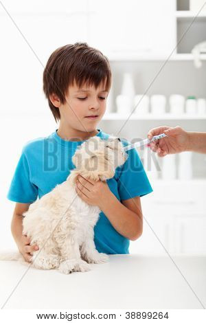 Boy at the veterinary doctor with his little doggy receiving medication