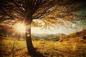 stock photo of pasture  - Lonely beautiful autumn tree  - JPG