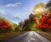stock photo of paved road  - paved road in the autumn forest - JPG