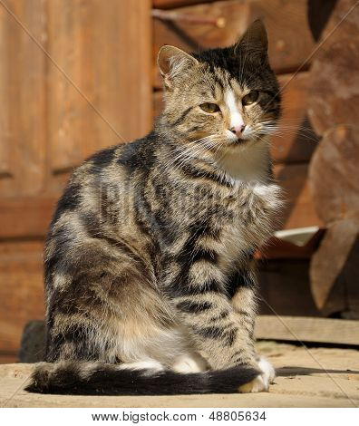 Cat Sitting On The Woden Floor