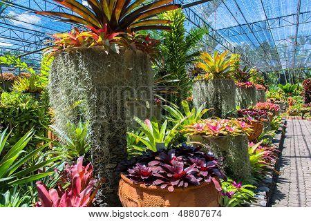 Bromeliads plants