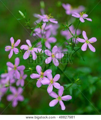 Rosepink Flower