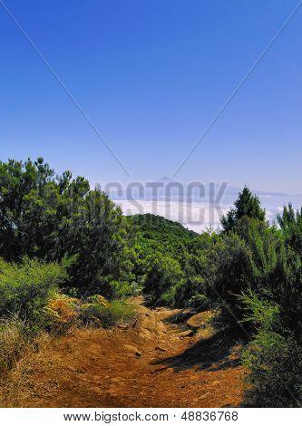 View Of Teide From Mount Of Garajonay On Gomera