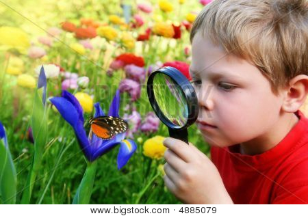 Child Observing A Butterfly