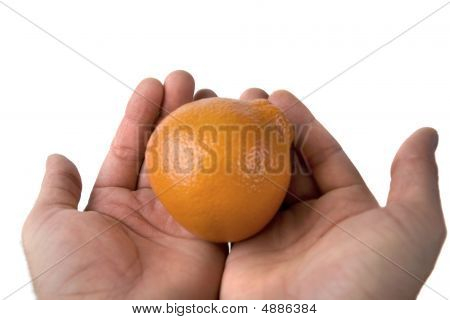 Hands Holding An Orange