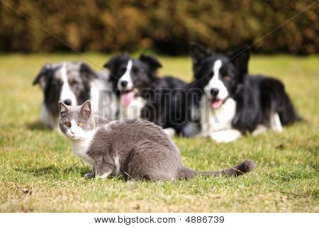 Three Dogs Gazing Into A Cat