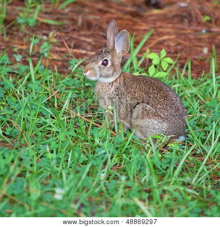 Shady Rabbit