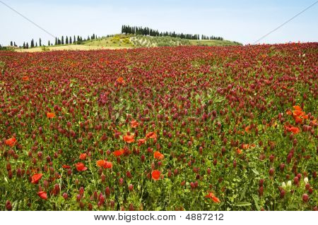 Red Flower Landscape