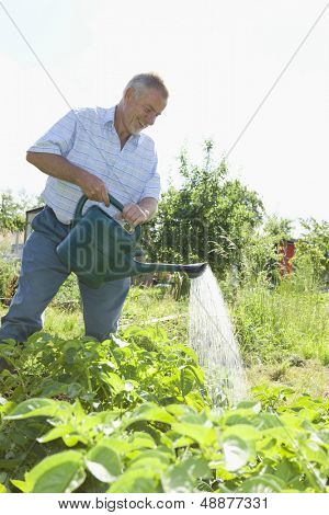 Happy senior man watering plants in allotment