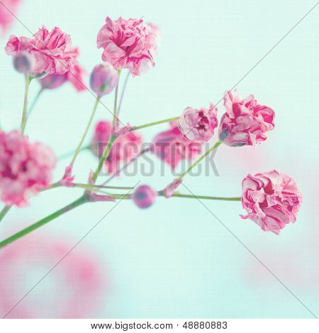 Closeup Of Pink Baby's Breath Flowers