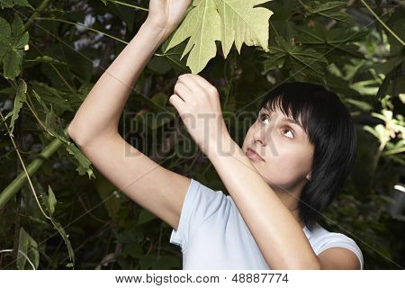 Young female botanist examining leaf in greenhouse