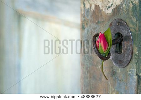 Rose Hanging From An Old Key