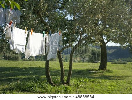 White Clean T-shirts Drying On A Clothesline