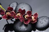 stock photo of raindrops  - Branch red orchid with zen stones on wet black background - JPG