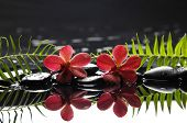 stock photo of fern  - Two red orchid with fern on therapy stones - JPG