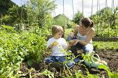 stock photo of vegetation  - Mother and son gardening together in an allotment - JPG