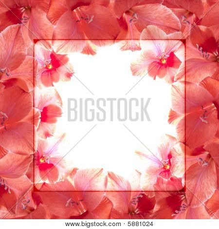 Beautiful Background In The Form Of A Framework From Red Flowers