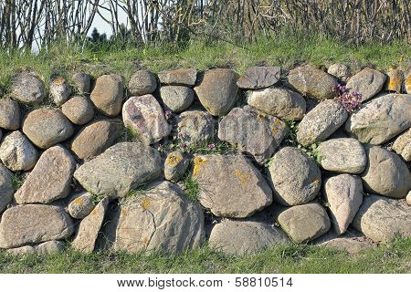 Frisian Stone Wall On The Island Of Sylt With Deadnettle