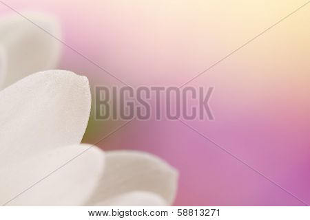 Lila and white flower details. Real photographs of beautiful flowers.