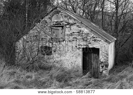 Old Shack In The Forest