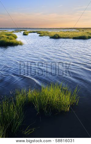 Ocean Inlet with Salt Marsh Grasses