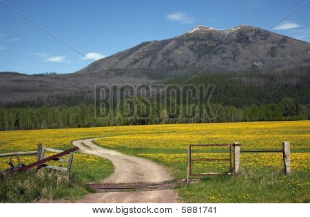Yellow Flower Farm Road Fence Countryside Glacier National Park Montana