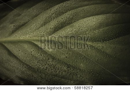 Leaf With Waterdrops