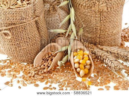 Corn kernel seed meal and grains in bags close up  isolated on a white background