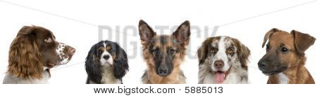 Portrait of different breeds of dogs against white background