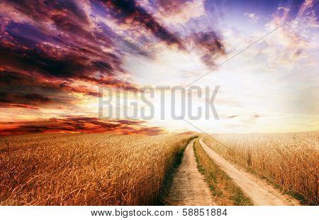 Rural dirt road through the field