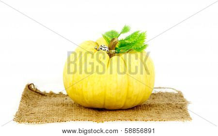 Pumpkin One Of Felicitous Vegetable