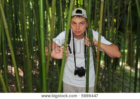 Photographer In Bamboo Grove In  Sochi Arboretum
