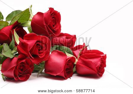 Bouquet of roses on white background