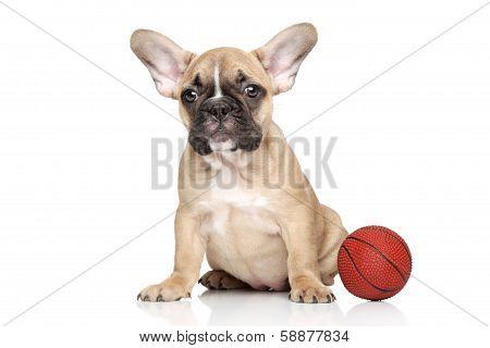 French Bulldog With Small Orange Basketball