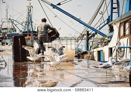 Unloading fish from boats