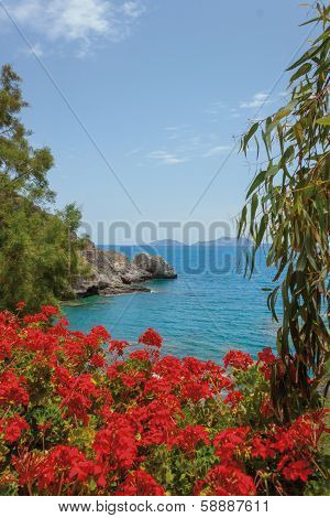 red flowers of geraniums, Crete Island